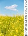 春天圖像強姦開花和藍天和雲彩 39578502