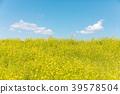 春天圖像強姦開花和藍天和雲彩 39578504