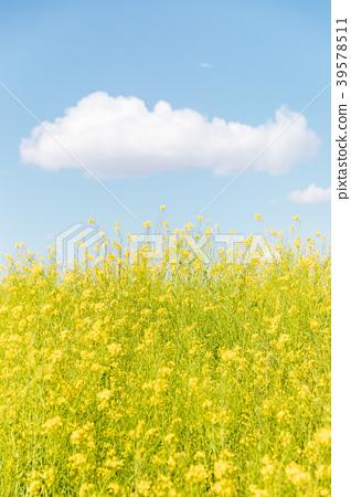 春天圖像強姦開花和藍天和雲彩 39578511