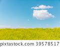 春天圖像強姦開花和藍天和雲彩 39578517