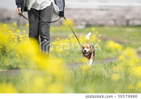 Spring dog 39579980
