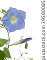花朵 花卉 花 39580085