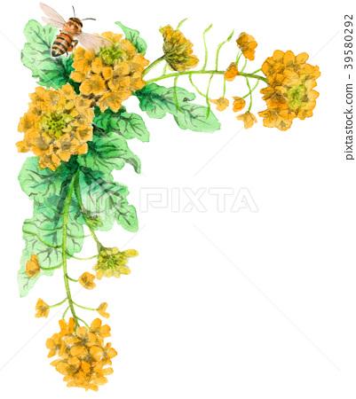 ดอกเรป,ดอกไม้,ผึ้ง 39580292