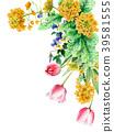 油菜籽花和郁金香裝飾框架繪與水彩 39581555