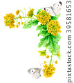 수채화로 그린 유채 꽃과 배추 흰나비 장식 프레임 39581653