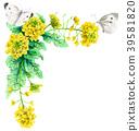 强奸开花和白色蝴蝶装饰框架与水彩 39581820
