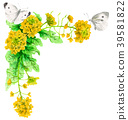 Decorative frame of rape blossoms and white butterfly with watercolors 39581822