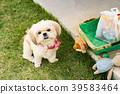 Cute small dog sitting on the grass 39583464