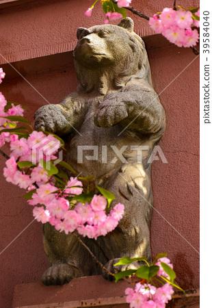 bear sculpture among the cherry blossom flowers 39584040