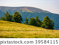 forested hills of Carpathian mountains 39584115