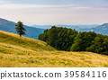 forested hills of Carpathian mountains 39584116