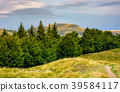 forested hills and meadows of Svydovets ridge 39584117