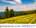 forested hills and meadows of Svydovets ridge 39584137