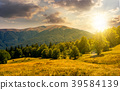 forest on grassy meadows in mountains at sunset 39584139