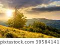 tree on the grassy hillside on at sunset 39584141