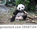 小熊猫 39587104