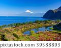 桃花 富士山 海洋 39588893
