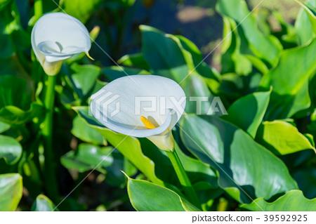 台北 台湾 绿色 39592925