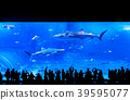 People watching whale shark at Okinawa Aquarium 39595077