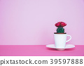 Small cactus in a flowerpot on a trendy background 39597888