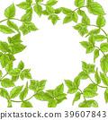 mint, peppermint, vector 39607843