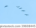 Flock with flying cranes 39608445