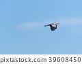 Flying Grey Heron by a blue sky 39608450