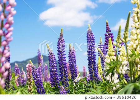 ทุ่งดอกไม้,ดอกไม้,ที่ว่าง 39610426