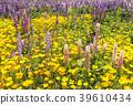 ทุ่งดอกไม้,ไม้,โรงงาน 39610434