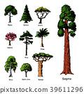 樹木 樹 向量 39611296