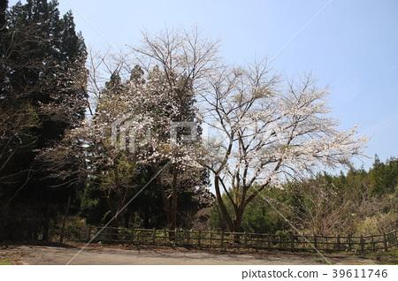 도야마 후쿠오카 가족 여행 마을 다섯 번째 캠프장 벚꽃 39611746