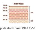 人體皮膚的橫截面圖(帶文字) 39613551