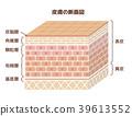 人體皮膚的橫截面圖(帶文字) 39613552