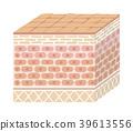 受損人體皮膚(粗糙皮膚)的剖面圖(損壞) 39613556