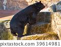 다마 동물공원, 타마 동물공원, 곰 39614981