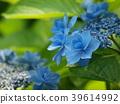 클로즈업, 잎, 장마 39614992