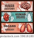 anatomy, human, sketch 39616180