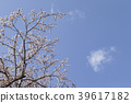 푸른, 꽃잎, 꽃놀이 39617182