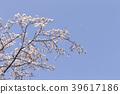 푸른, 꽃잎, 꽃놀이 39617186