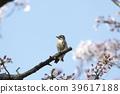 นก,ดอกซากุระบาน,ซากุระบาน 39617188
