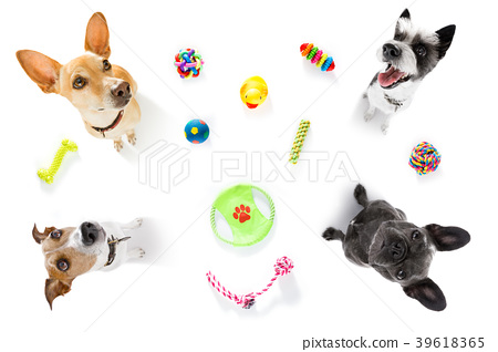 couple of dogs  with pet toys 39618365