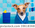 dog in shower  or wellness spa 39618368
