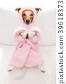 animal, bathrobe, dog 39618373