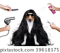 grooming dog at the hairdressers 39618375
