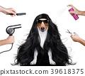animal, dog, dryer 39618375