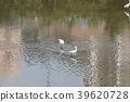 little white heron stands on the shore against 39620728