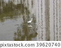 little white heron stands on the shore against 39620740