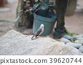 little white heron stands on the shore against 39620744