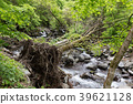 Shioya-cho, Tochigi Prefecture fallen tree (May) 39621128