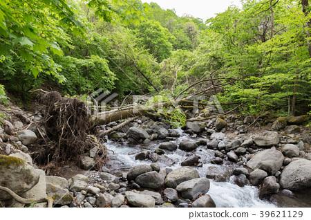 Shioya-cho, Tochigi Prefecture fallen tree (May) 39621129